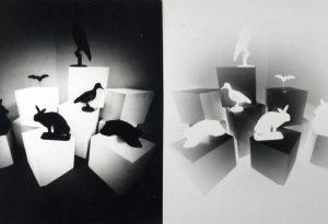 aktuelle Fotografie mit der Camera Obscura